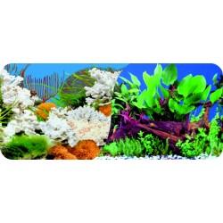 Dwustronne tło do akwarium Tapeta koral/korzenie