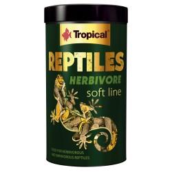 REPTILES HERBIVORE Tropical