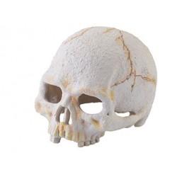 Kryjówka czaszka Primate  Exo Terra