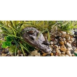 Wsypa Krokodyl
